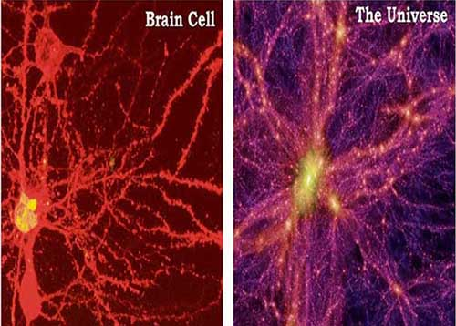 The Universe Grows Like a Giant Brain